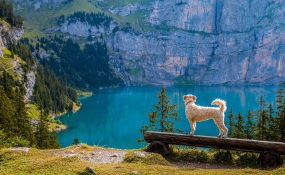 Unbelievable Wonderful Nature Heaven Land of Switzerland
