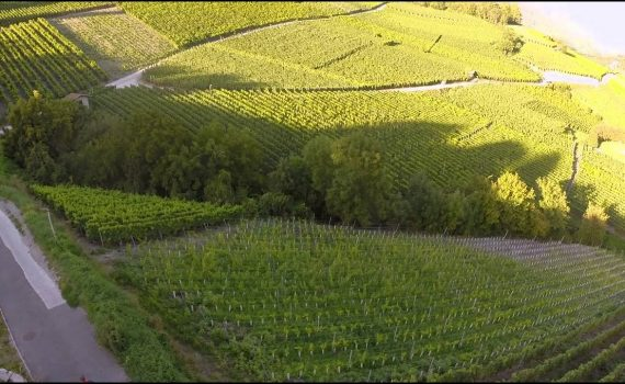 Valais Wine Trail - Savoring Switzerland