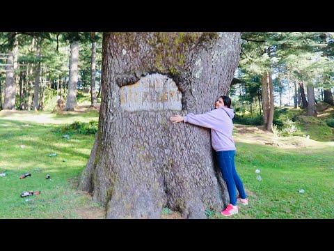 Best Tourist Place in Dalhousie: Khajjiar ~ Mini Switzerland   Must Vi...