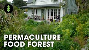 Amazing 23-Year-Old Permaculture Food Forest - An Invitation for Wildn...