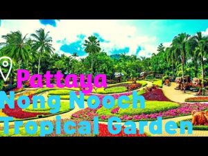 Nong nooch Gardern| Day#3|Pattaya Visiting Places|Places To Visit In P...
