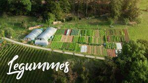 BEAUTIFUL Farm on a STEEP SLOPE in Switzerland // Legummes