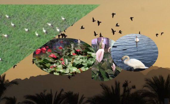 Beautiful place in Qatar  कतारको रमणीय सहरको दृष्य•Amazing vlog,Kumar ...